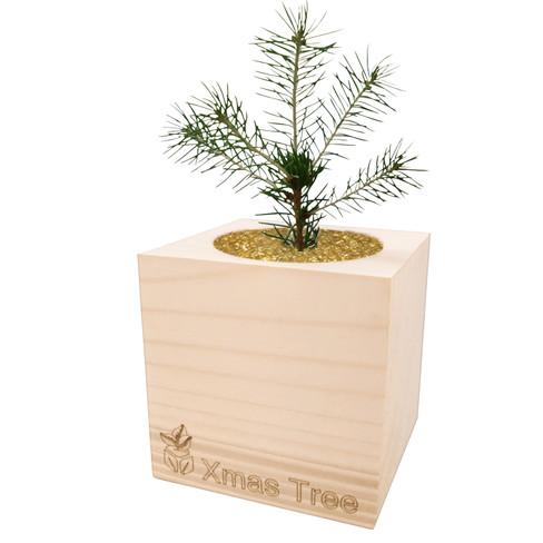 Kerstboom uit de houten box